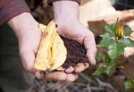 Phơi khô vỏ chuối vùi vào gốc hồng, 1 tuần sau hoa ra trĩu trịt, căng tràn