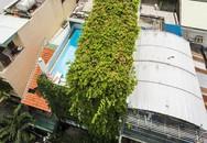 Căn nhà ống như vườn treo xanh mát giữa Sài Gòn