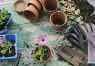 Nếu đam mê làm vườn, bạn nhất định không được bỏ qua 4 xu hướng trồng trọt, trang trí vườn nhà mới được tiết lộ này