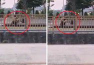 Cặp đôi vô tư 'ân ái' trên vỉa hè, dùng tấm áo mỏng che phần dưới vẫn bị lên án