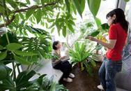 Không tốn 1 viên gạch xây tường, 2 cô gái biến nhà hẹp thành nơi ở xanh mát