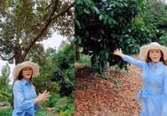 Lý Nhã Kỳ: Hết đầu tư vườn rau organic ở Đà Lạt giờ lại mua 1ha vườn trồng bạt ngàn sầu riêng
