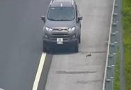 Tước bằng lái tài xế liều lĩnh đi lùi trên cao tốc Hà Nội - Hải Phòng
