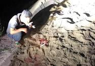 Gia đình bé trai 7 tuổi bị gần chục con chó dữ tấn công ở Hưng Yên đã xin con về nhà