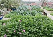 Mẹ đảm ở Hà Nội chia sẻ 12 năm kinh nghiệm trồng rau quả sạch như trang trại trên sân thượng