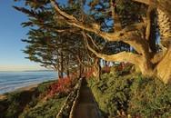 Khu vườn bên bờ biển chẳng khác thiên đường trong biệt thự cũ đang được rao bán
