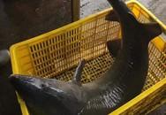 Đại gia chi hơn 15 triệu để mua cá tầm 'khủng' về ăn