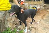 Chú chó bới đất cứu bé sơ sinh bị chôn sống trên cánh đồng Thái Lan
