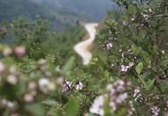 Thâm cung bí sử (180 - 3): Tai nạn trên đồi sim