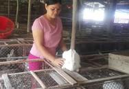 Người phụ nữ vùng quê bỏ túi hàng trăm triệu đồng mỗi năm với đàn thỏ ngàn con