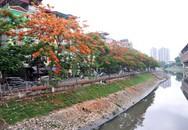 Ngắm hàng phượng đỏ rực hai bờ sông Tô Lịch