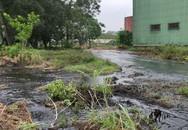 Huyện Thạch Thành, Thanh Hóa: Dân hoang mang vì hàng nghìn khối rỉ mật chảy tràn ra môi trường sống