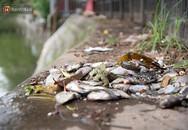 Cá chết trắng trên hồ Văn Chương, người dân đau đầu vì mùi hôi nồng nặc
