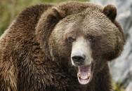 Người đàn ông thoát chết trong rừng nhờ cắn lưỡi gấu