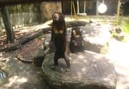 Sự thật đoạn clip tố Thảo Cầm Viên bỏ đói gấu đến gầy trơ xương, phải xin ăn khách tham quan