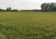 """Huyện Quảng Xương (Thanh Hóa): Nhà thầu mất tích, 200 ha đất... """"đi hoang"""""""