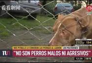 Trộm lẻn vào nhà bị chó Pitbull cắn dã man, chủ nhà phải chịu trách nhiệm pháp lý?