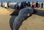 Khánh Hòa: Cá voi hơn hai tấn, dài 5m dạt vào bờ biển