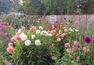 Khu vườn quá đỗi thơ mộng với hoa và rau quả của người mẹ đơn thân cùng cô con gái nhỏ xinh đẹp