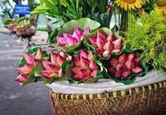 """Cách phân biệt quỳ và sen chuẩn """"không trượt phát nào"""", thách thức dân bán hoa lừa đảo"""