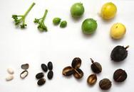 Yên Bái: 4 em bé ngộ độc do ăn hạt quả dầu mè