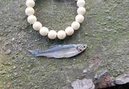 Cá dầu hồi sinh trở lại ở hồ Hoàn Kiếm sau nhiều năm vắng bóng