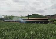 Huyện Thường Xuân (Thanh Hóa): Xưởng than hành dân
