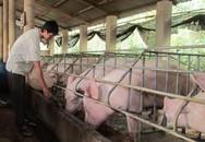 Thịt lợn bất ngờ tăng giá mạnh, thương lái săn hàng bà con không bán
