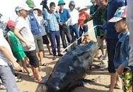 Phát hiện xác cá voi nặng khoảng 1 tấn trôi dạt vào bờ biển Hà Tĩnh