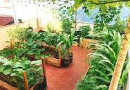Cô gái 9x ở TP. HCM khiến nhiều người bất ngờ khi sở hữu sân thượng xanh tươi với đủ loại rau quả sạch