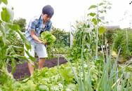 Kỹ sư Việt thuê đất làm vườn nhà, lập 'hội nông dân' ở Nhật