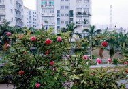 Gia đình Sài Gòn từng bị 'lụt' nhà vì vườn sân thượng 200 m2