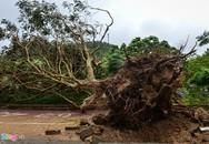 Việt Nam còn đón bao nhiêu cơn bão trong năm 2019?