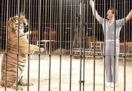 Bốn con hổ cắn chết người huấn luyện trong rạp xiếc ở Italy