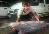 """Bắt được cá trắm """"khủng"""" dài 1,5m ở hồ Thác Bà"""