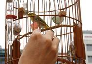 Chồng mê chim cảnh hơn yêu... vợ con (?!)
