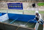Lắp đặt khu vực trình diễn xử lý nước ô nhiễm, chuyên gia Nhật sẽ tắm ở sông Tô Lịch