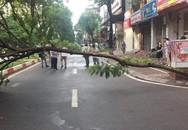 Hà Nội: Cây đổ ngang đường lúc rạng sáng khiến 1 người đàn ông tử vong