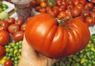 """Khu vườn trồng đủ loại rau củ quả """"khổng lồ"""" của ông bà lão yêu thích làm vườn sau khi nghỉ hưu"""