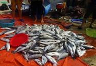 Thạch Hà, Hà Tĩnh: Dân điêu đứng vì cá nuôi lồng bè chết bất thường cả trăm tấn sau lũ