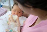 Sữa non 24h chứa thành phần miễn dịch gấp 100 lần sữatrưởng thành