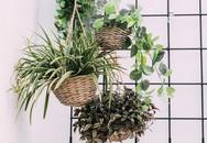 15 cách làm vườn treo trong nhà xinh yêu