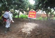 Bệnh dịch tả lợn châu Phi xuất hiện tại Quảng Ninh