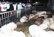 Xuất hiện bệnh dịch tả lợn châu Phi tại Hải Dương