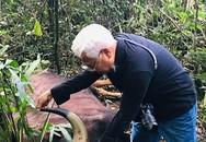 Bò tót 800 kg chết trong khu bảo tồn Đồng Nai