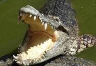 Kinh hoàng: Bé trai bị cá sấu ăn thịt ngay trước mắt người thân