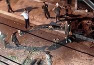 Lý do chặt hạ cây sưa đỏ ở phố cổ Hà Nội giữa đêm