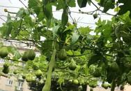 Mẹ đảm ở Czech cải tạo sân bê tông thành khu vườn với bạt ngàn rau củ quả Việt tươi tốt