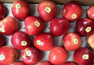 Cùng là táo mà có đến 10 loại khác nhau trên thị trường cho bạn tha hồ lựa chọn