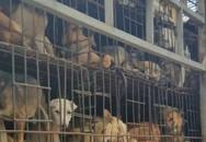 TP HCM kêu gọi người dân không ăn thịt chó